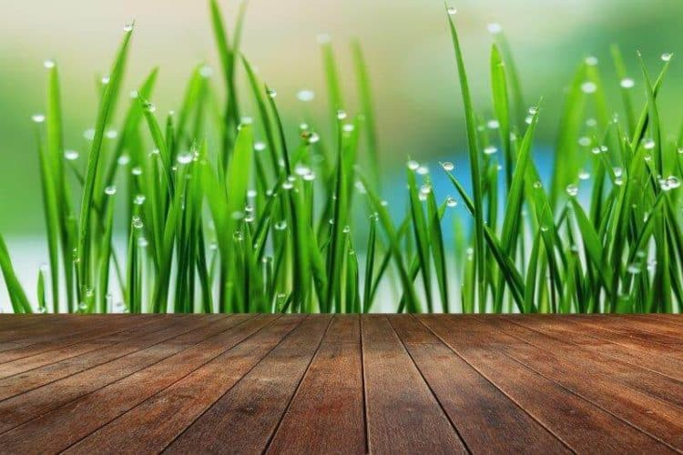 How to choose green flooring for your house